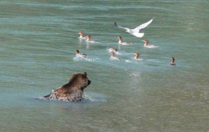 Фотографии забавных медвежат и больших медведей.