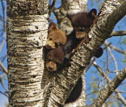 Отряд хищных - медведи (41 фото) - смотри на hohot.in.ua!