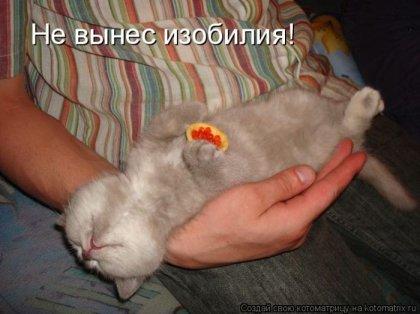 Смешные котоматрицы