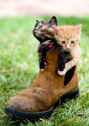 Обувь для животных