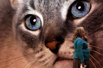 Выставка кошек Supreme Cat Show