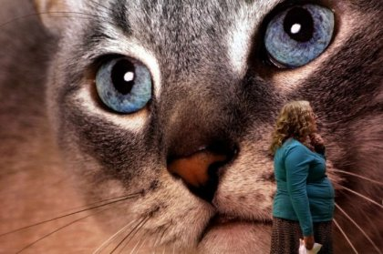 �������� ����� Supreme Cat Show