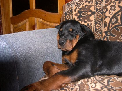 Подборка спящих собачек