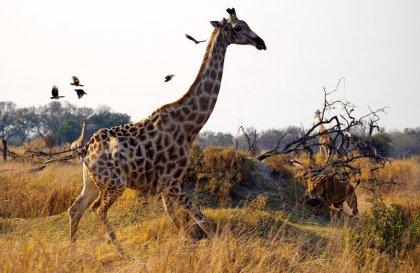 Конкурс National Geographic 2010