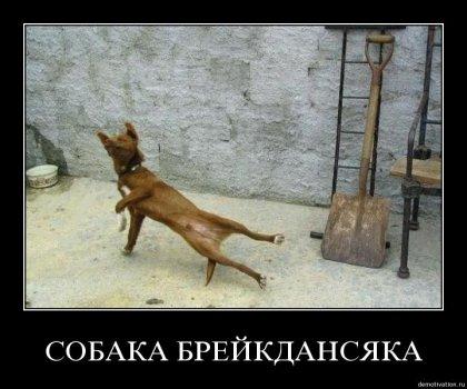 Собаки подборку собираки или собаки демотиваки :)