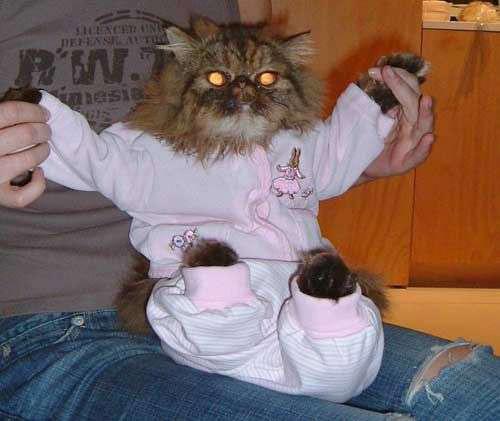 Прикольные кошки в пижамах