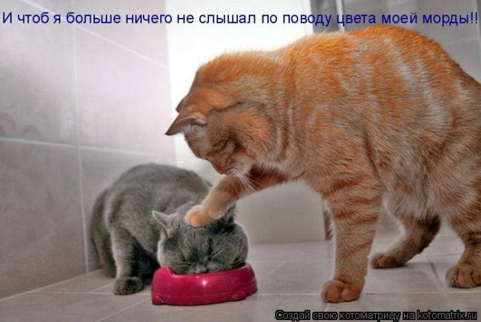 http://www.bugaga.ru/uploads/posts/2010-12/1293154286_kotomatritsa-10.jpg