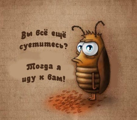 Гадание на тараканах