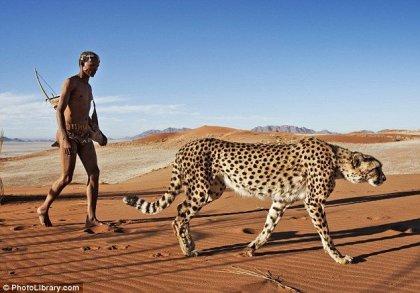 Подружиться с гепардом
