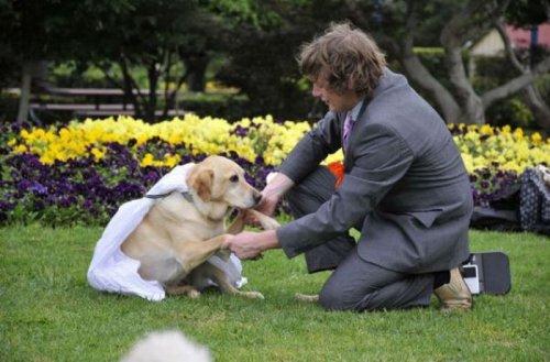 Парень женился на собаке
