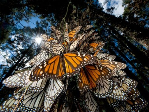 National Geographic: Лучшие фото животных за 2010 год