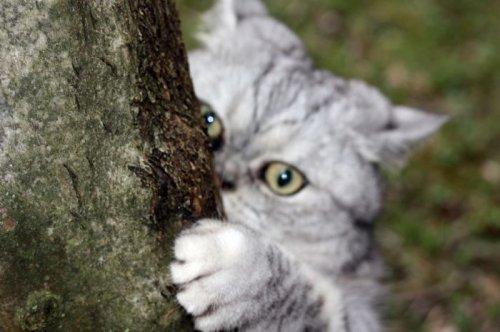 Забавная кошка Джули