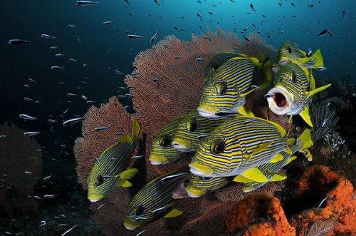 Guardian: лучшие подводные фото 2010