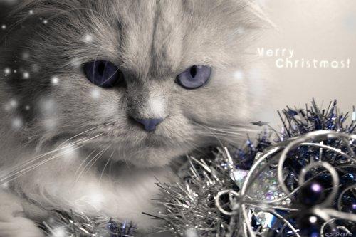 Новогодние котэ