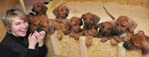 Собака-героиня родила 17 щенков