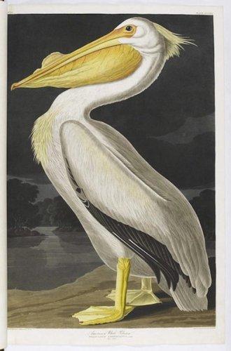 Птицы Америки - самая дорогая книга в мире