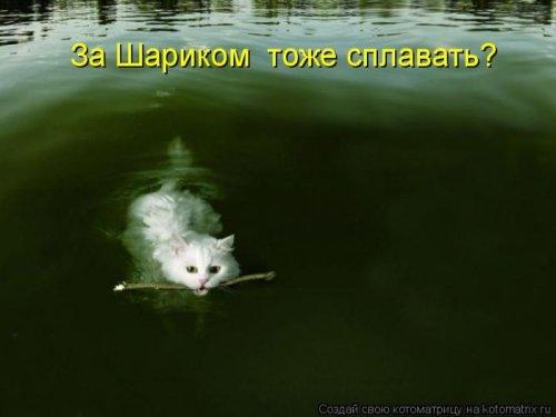 Котоматрица свежак (14 фото)