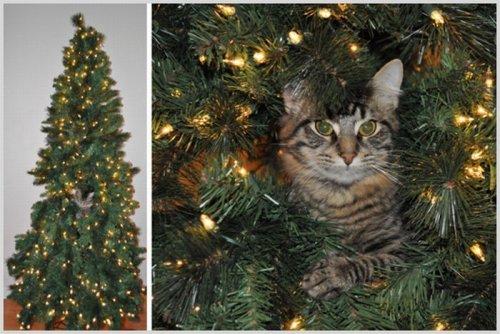 Коты в новогодних елках