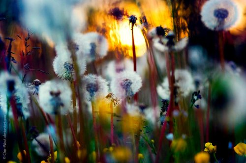 Природа от фотографа Oer-Wout
