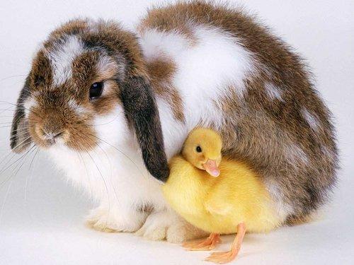 Новогодние кролики
