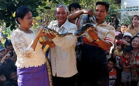 Свадьба питонов