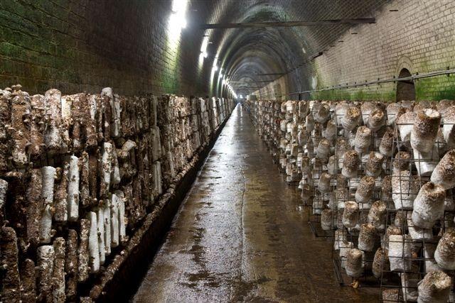 Ферма грибов как сделать