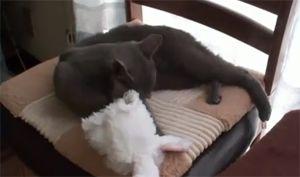 Я не кот, я - кролик!