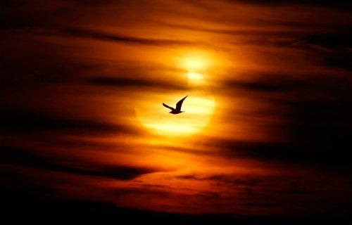 Первое солнечное затмение в 2011 году