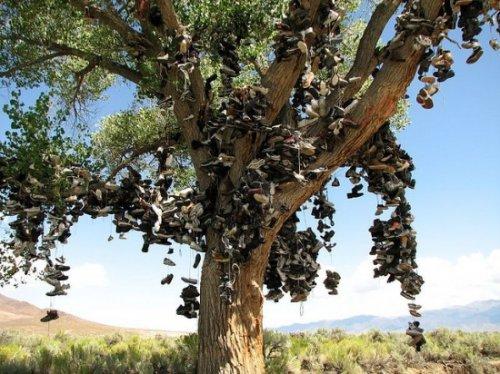 Дерево Старой Обуви