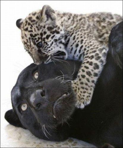 Эти забавные животные. Часть 4