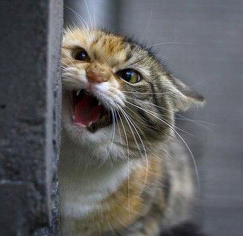 Забавные законы для кошек