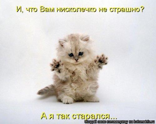Лучшие котоматрицы недели (11 фото)