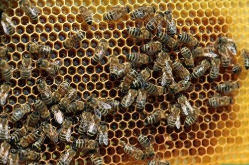 Откуда берется мед