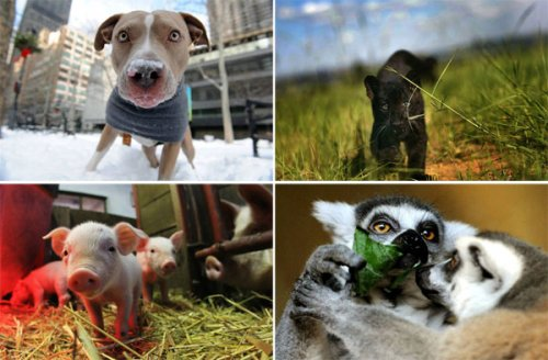 Фотоподборка за неделю: животные