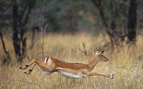 Африканские животные