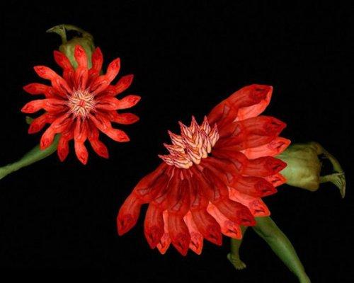 Цветы из людей (13 фото)