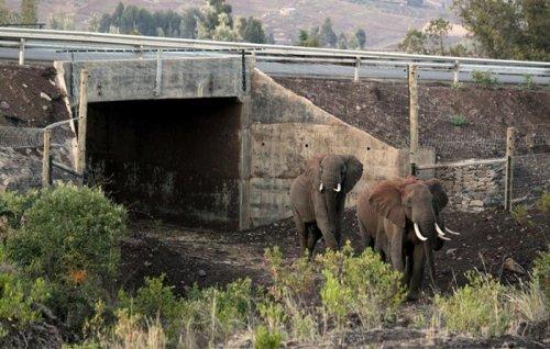 Подземный переход для слонов