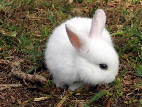 Вирусная болезнь преимущественно молодых кроликов, характеризующаяся воспалительными...