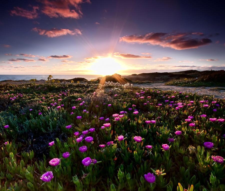 Природа красивые цветы