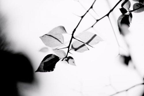 Макро фото природы от Matthias Chug
