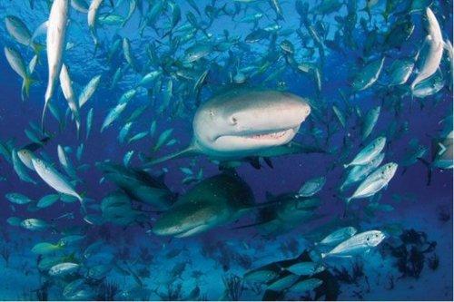 Среди акул