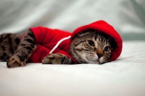 Кошки в толстовках