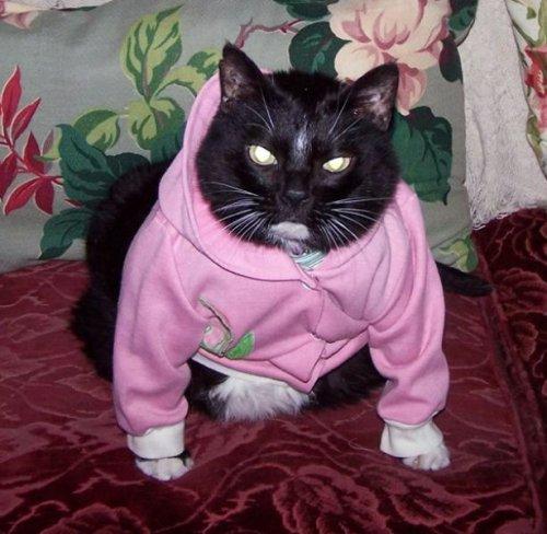 Кошкам тоже иногда бывает холодно, и они не прочь порой примерить на...