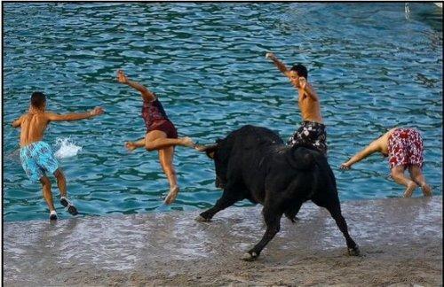 Игры с быками