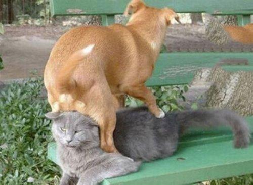 Собаки и фейлы