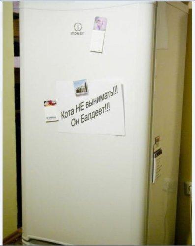 Коты и холодильники (11 фото)