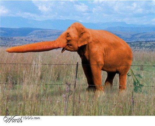 Фотоманипуляция: растения и животные (часть 2)