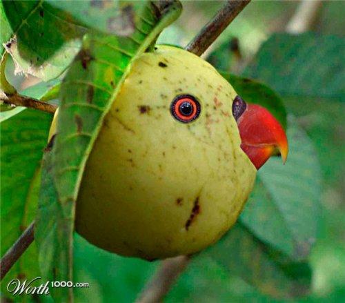 Фотоманипуляция: растения и животные (часть 3)