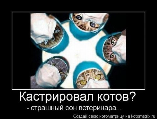 Котоматрица свежак (17 фото)