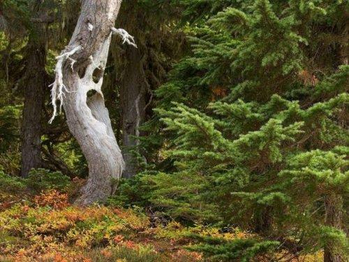 Старые деревья обретают новую жизнь